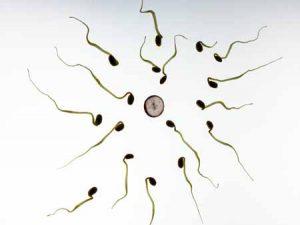 bentuk sperma-fertility-impotensi