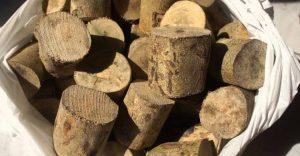 Manfaat kayu ular