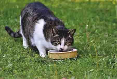 kucing bikin mandul-impotensi